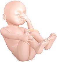27 semanas de Gestação