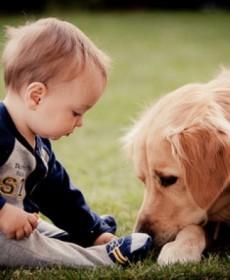 Bebê bricando com cachorro