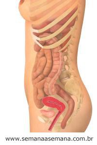 Imagem do corpo da gestante durante a primeira semana de gestação